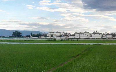 Los más bellos arrozales en Dali